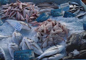 Les poissons de Christophe, pêchés dans la nuit, du côté de Sète